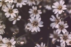 Petites fleurs blanches de forêt sur un fond noir photos stock