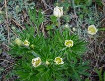 Petites fleurs blanches minuscules mignonnes Image libre de droits