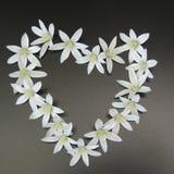Petites fleurs blanches sur un fond noir Photo stock