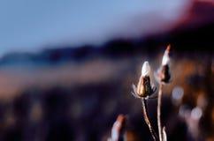 Petites fleurs de champ dans le domaine photographie stock