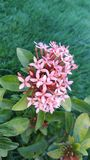 Petites fleurs de jardin Photo libre de droits