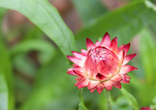Petites fleurs de papier Photographie stock libre de droits