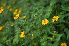 Petites fleurs jaunes dans un jardin de vintage photos stock