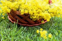 Petites fleurs jaunes dans un support de panier sur l'herbe verte images libres de droits