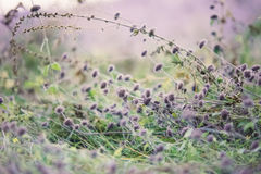 Petites fleurs pourpres Photographie stock