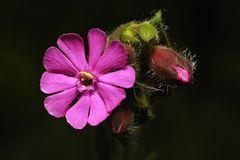 Petites fleurs roses Photos stock