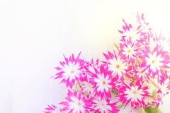Petites fleurs roses au-dessus de la table en bois blanche avec l'espace de copie Photographie stock libre de droits