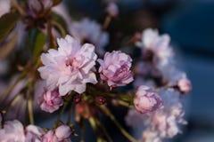 Petites fleurs roses image stock