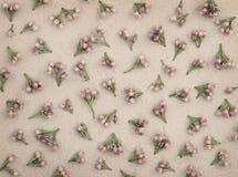 Petites fleurs roses sur le papier gris Images stock