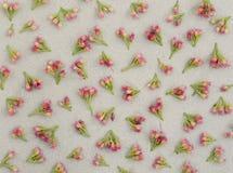Petites fleurs roses sur le papier gris Photos stock