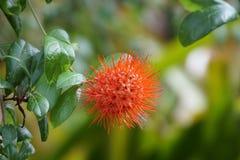 Petites fleurs rouges images stock