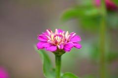 Petites fleurs rouges Photographie stock
