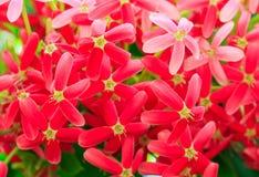Petites fleurs rouges dans le jardin public Images libres de droits