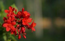 Petites fleurs rouges sur le fond Photo stock