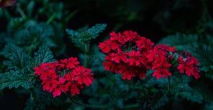 Petites fleurs rouges images libres de droits