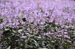 Petites fleurs tropicales pourprées et blanches Image stock