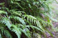 Petites fougères s'élevant dans la forêt Photographie stock libre de droits