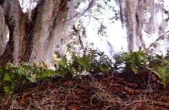 Petites fougères sur la branche d'arbre Photos libres de droits