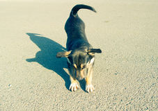 Petites gorgées de petit chien sur l'asphalte photo stock