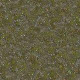 Petites herbes et pierres sur le sol Image libre de droits