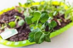 Petites jeunes jeunes plantes Photographie stock libre de droits
