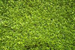 Petites lames de vert Photographie stock