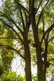 Petites maisons d'oiseau accrochées dans les arbres Images stock