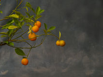 Petites mandarines image stock