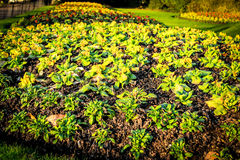 Petites plantes et fleurs growging hors du sol dans le jardin Images stock