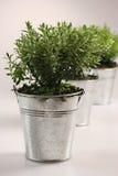 Petites plantes vertes Photographie stock