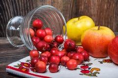 Petites pommes de paradis et les grandes pommes habituelles Image libre de droits