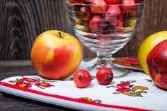 Petites pommes de paradis et les grandes pommes habituelles Photos libres de droits