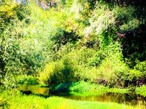 Petites rivière et forêt de septembre photographie stock