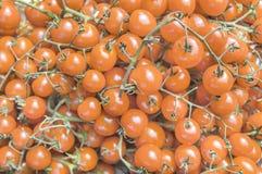 Petites tomates-cerises mûres oranges fraîches organiques sur le marché le jour ensoleillé Photos stock