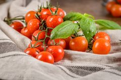 Petites tomates-cerises rouges Images stock