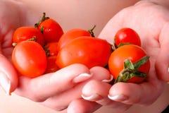 Petites tomates dans les mains d'une fille Images libres de droits