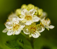 Petites transitoires de fleur images stock