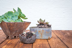 Petites usines dans des pots de fleurs rouillés Photographie stock