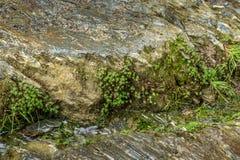 Petites usines de rive s'élevant sur la roche Photo libre de droits