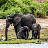 Petits animaux d'éléphant Photo stock