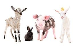 Petits animaux de ferme mignons, se tenant ensemble photographie stock libre de droits