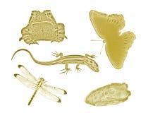 Petits animaux et insectes d'arrière-cour d'or Photos stock