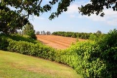 Petits arbres dans l'horizontal de jardin de pépinière Photos stock