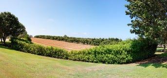 Petits arbres dans le jardin de pépinière Photo libre de droits