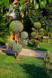 Petits arbres Manicured dans le jardin Images libres de droits