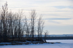 Petits arbres nus de l'hiver par un lac figé Images libres de droits