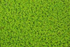 Petits arbres verts sur la surface de l'eau images libres de droits