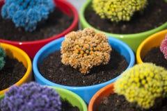 Petits cactus colorés Image stock