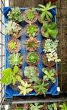 Petits cactus verts dans Sofia Botanical Garden photos libres de droits