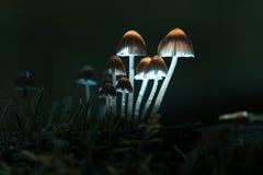 Petits champignons de couche Photo libre de droits